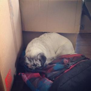 backpack sleeping